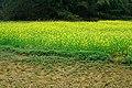 英德田园之旅 - panoramio (2).jpg