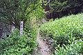 観音の滝入り口 - panoramio.jpg