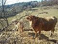 06065 Passignano sul Trasimeno, Province of Perugia, Italy - panoramio (18).jpg