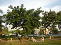 08685jfProvincial Capitol Boulevard San Fernando City Pampangafvf 15.jpg
