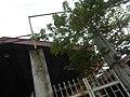 09711jfSanta Clara Mission Community Church Malabon Cityfvf 47.jpg