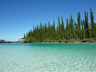 New Caledonia - Araucaria columnaris, New Caledonia