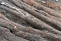 14-11-15-Ausgrabungen-Schweriner-Schlosz-RalfR-039-N3S 4022.jpg