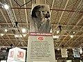 16. Bucuresti, Romania. Targul de carte GAUDEAMUS 2019. Scriitoarea din Bielarus, Laureata Premiului Nobel ptr. Literatura in 2015 cu cartea Dezastrul de la Cernobil.jpg