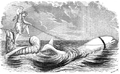 1862 whale Aquarial and ZoologicalGardens Boston Ballous.png