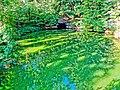 2. Ахеронтійське озеро (Мертве озеро), (парк «Софіївка»), Умань.JPG