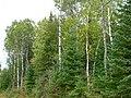 2005-09-16 Peuplement hors-dispo (05) DDumais.jpg