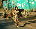 2005 Addis Ethiopia 5858447.jpg