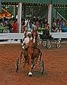 2009 Shelbyville Horse Show (3867464075).jpg