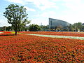 2010 Taipei Flora Expo sea of flowers.jpg