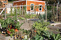 2010 community garden seattle 5098563537.jpg