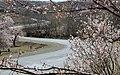 2013 Spring blossoms of Shahr-e Kord 01.jpg