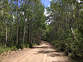 2014-06-24 12 08 23 View north along Elko County Route 748 (Charleston-Jarbidge Road) about 7.1 miles north of Charleston, Nevada.jpg