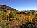 2014-10-04 14 13 37 View of Subalpine Firs, Aspens during autumn leaf coloration from Charleston-Jarbidge Road (Elko County Route 748) in Copper Basin about 11.6 miles north of Charleston, Nevada.JPG