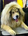 2014 Westminster Kennel Club Dog Show (12486394695).jpg