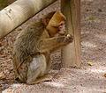 2016-04-21 13-48-26 montagne-des-singes.jpg