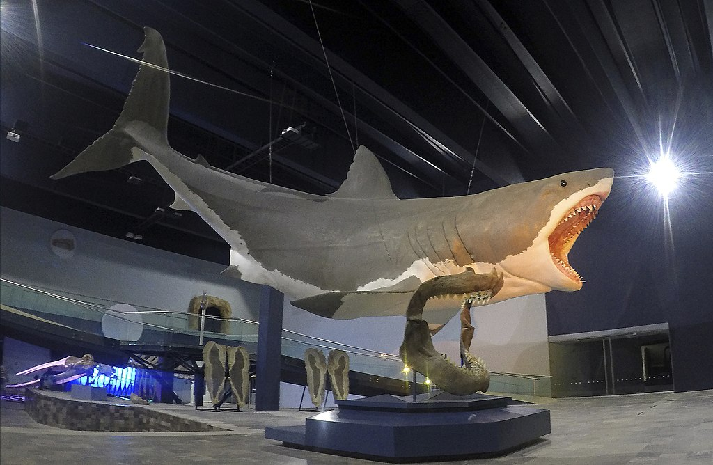 Sculpture of a giant shark mounted on display in a museum next to a mounted shark jawbone