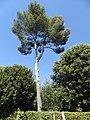 2017-06-20 Giardino di Boboli 98.jpg