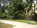71Mehan Garden Ermita Manila Universidad de Manila 34.jpg