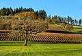 A Beautiful Place to Drink Wine (32245295190).jpg