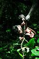 A Macaca fascicularis hand helping a Macaca fascicularis baby in Bali, Indonesia.jpg