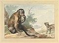 A Monkey Sitting on a Rock Looking at a Civet MET DP820049.jpg