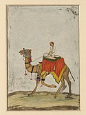 A camel with its rider playing kettle drums..jpg