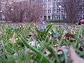 A jednak wiosna-) - panoramio.jpg