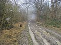A misty Ridgeway - geograph.org.uk - 1172969.jpg