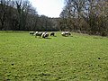 A small pasture between two woods - geograph.org.uk - 1207223.jpg