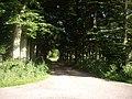 A treen avenue - geograph.org.uk - 1388023.jpg