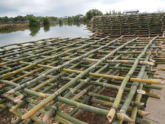Bamboo trays used in mussel farming (Abucay, Bataan, Philippines) Abucay,Bataanjf3721 06.JPG