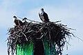 Acadia 2012 08 23 0197 (7958554872).jpg