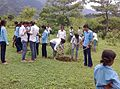 Afforestation in Nepal.jpg