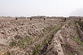 Afghan National Security Forces (ANSF) clear a grape orchard while conducting a dismounted patrol in Panjwai district, Kandahar province, Afghanistan, April 1, 2012 120401-A-VQ566-497.jpg