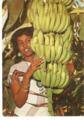 Afgoye fruit.png