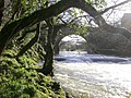 Afon Teifi - geograph.org.uk - 343948.jpg