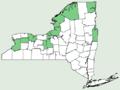 Agalinis paupercula var borealis NY-dist-map.png