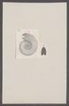 Ammonites spec. - - Print - Iconographia Zoologica - Special Collections University of Amsterdam - UBAINV0274 091 01 0011.tif