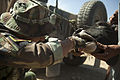 An Afghan National Army special forces medic administers medicine to cattle at an overwatch position April 3, 2013, in Helmand province, Afghanistan 130403-M-BO337-068.jpg