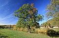 An der Zwickauer Mulde in Waldenburg im Herbst. 2H1A6162WI.jpg