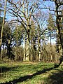 Ancient Woodland in the 'Great Copse' - geograph.org.uk - 364155.jpg