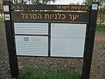 Anemone coronaria in Megiddo Airfield (2).jpg