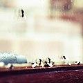 Ants. migration.jpg