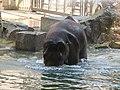 Antwerp Zoo (12211022744).jpg