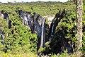 Araucária (Araucaria angustifolia) em frente a Cachoeira das Andorinhas.jpg