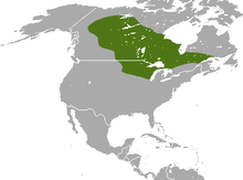 Arctic Shrew area.png