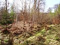 Ardkinglas Forest - geograph.org.uk - 181649.jpg
