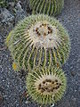 Arizona Cactus Garden 062.JPG