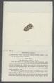 Armadillo variegatus - - Print - Iconographia Zoologica - Special Collections University of Amsterdam - UBAINV0274 098 09 0016.tif